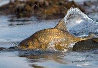 Биологи не рекомендуют выпускать пойманных рыб на волю