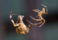 17 человек арестовали за «паучьи бои» на Филиппинах