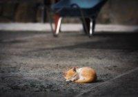 В США котенок проехал 27 км под капотом авто и выжил