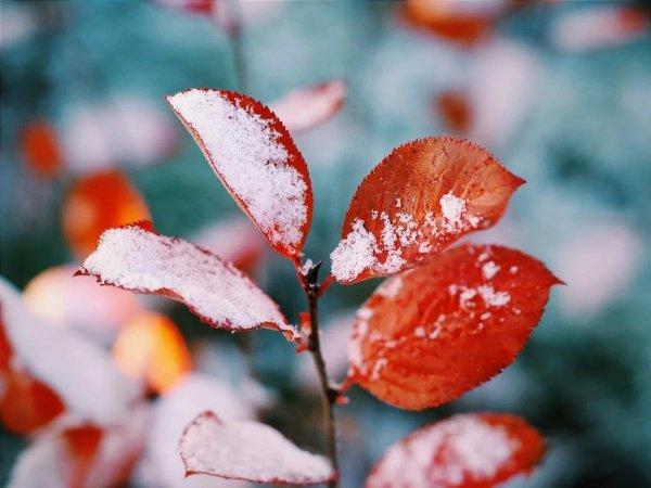 Снег прогнозируется в городе также и в ближайшие дни — в выходные, понедельник и вторник