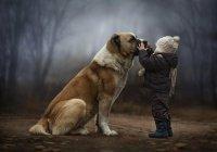 В Ростове-на-Дону пес спас хозяйку от убийцы (ВИДЕО)