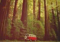 Аномальный лес в США шокировал путешественников (ВИДЕО)
