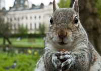 В Лондоне на встречу экологического комитета пришла белка (ВИДЕО)