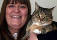 В Англии кошка спасла хозяйку от рака