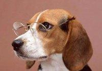 Доказано, что собаки понимают человеческую речь
