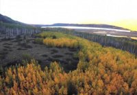 Люди убивают самый старый лес на планете