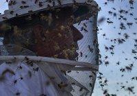 Замечено массовое исчезновение всех насекомых планеты