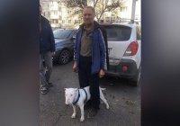 Пенсионер 3 недели бродил с собакой по тайге в Сибири