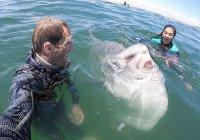 Улыбку рыбы-луны запечатлели в ЮАР