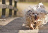 Названы самые дорогие для собак города России
