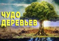 Дерево, которое расплакалось из-за разлуки с Пророком (мир ему)