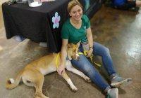 В США «слишком хорошего» пса вернули в приют
