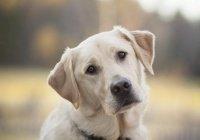 Обнаружена связь окраса собак с продолжительностью их жизни