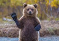 В Башкирии запечатлели медвежонка, ворующего мед (ВИДЕО)