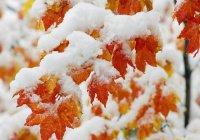 Первый снег выпал в Москве