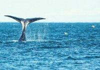 На побережье Бельгии выбросился 18-метровый кит