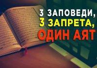 """3 заповеди и 3 запрета: о чем предупреждает нас Всевышний в суре """"Пчелы""""?"""
