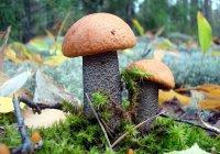 Бензин из грибов создали в России