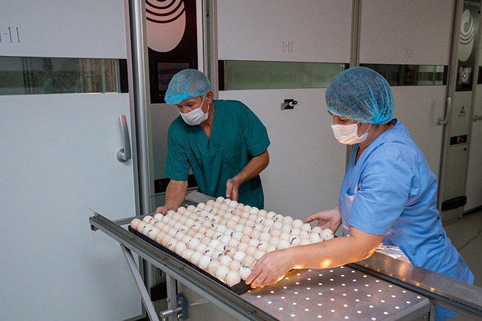 Возможно ли соблюсти все требования качества Халяль на крупном производстве?