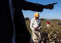 Туркменистан оказался «центром рабства» Европы и Центральной Азии