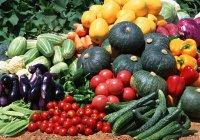 Названы фрукты и овощи, убивающие рак