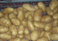 В Египте полиция занялась торговлей картофелем