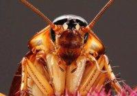 Тараканы используют карате, чтобы не стать зомби (ВИДЕО)
