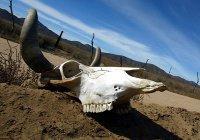 Ученые предсказали полное вымирание дикой природы