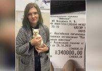 В Адыгее девушка заплатила за бездомного котенка 340 тыс. рублей