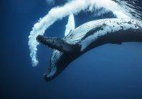 В США мужчина спас киту жизнь (ВИДЕО)