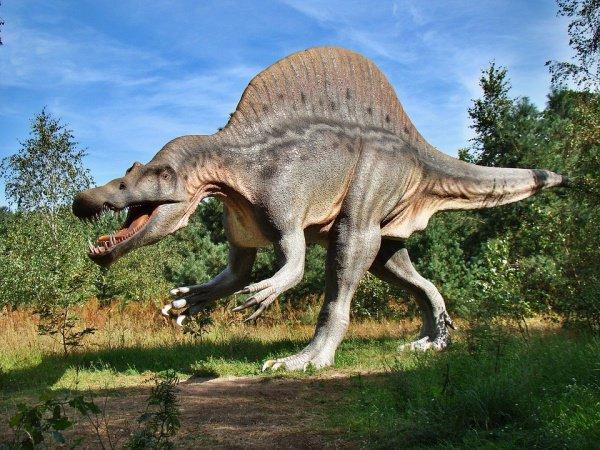Найденные учеными особи обитали 110 млн. лет назад