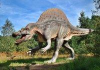 Неизвестных динозавров нашли в Аргентине