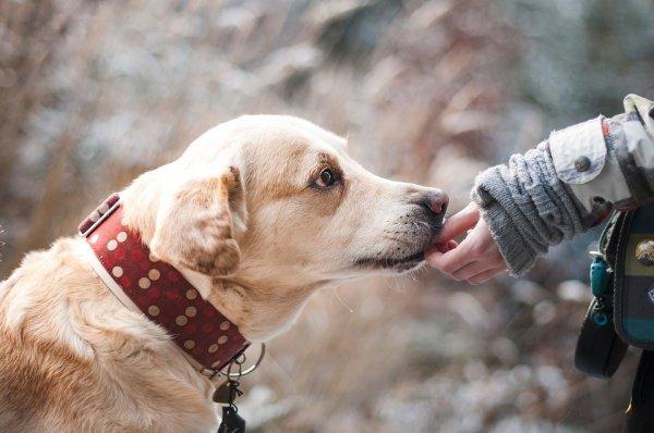 Самое трудное здесь — процесс обучения специальной собаки