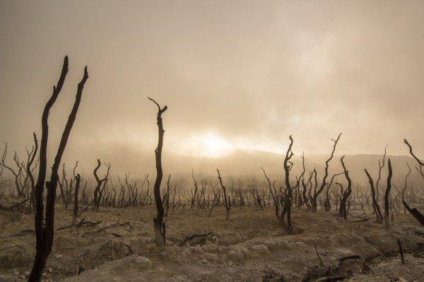 Самыми экологически проблемными странами мира были признаны Монголия, Мьянма и Афганистан