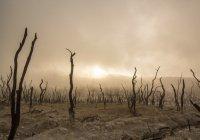 Составлен рейтинг стран с худшей экологией