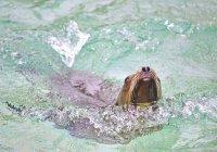 Злые тюлени напали на рыбака в Шотландии