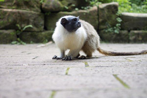 Животное обитало в Кении порядка 12,5 млн. лет назад
