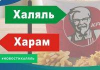 Соответствует ли сеть общественного питания КFC стандарту «Халяль»?