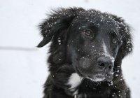 Собаку, примерзшую ко льду, спасли в Чите (ВИДЕО)