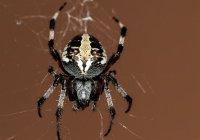 Нашествие пауков запечатлели в США (ВИДЕО)