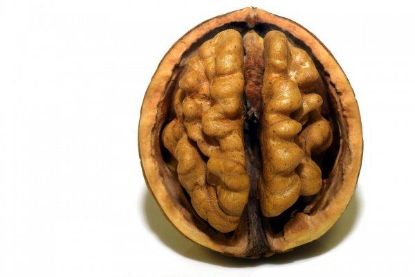 Сокращение содержания ГАМК при этом связано с развитием эпилепсии