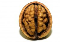 Разгадана 100-летняя тайна головного мозга