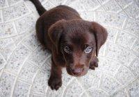 Футбольная сборная России подарила 14-летней болельщице щенка (ФОТО)