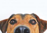В США пес спас от смерти целую семью