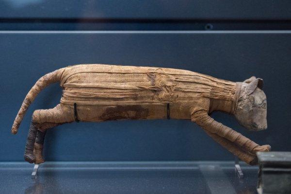 Мумия кошки в Каирском египетском музее.