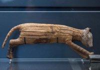 В Египте нашли мумии кошек и насекомых