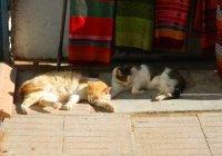 Британский турист скончался после укуса кошки в Марокко