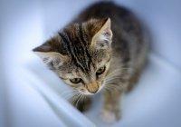 Сотрудники ГИБДД в Сибири спасли от смерти котенка