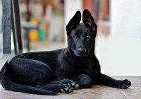 В Испании полицейские спасли щенка и оставили служить
