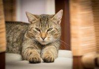 Кот, поющий грузинские песни, покорил Интернет (ВИДЕО)